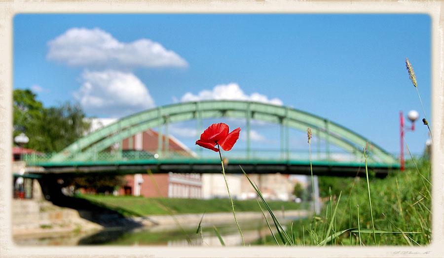 mostovi Zrenjanin
